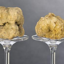 Serata di degustazione: tartufo bianco e nebbiolo di Domenico Clerici